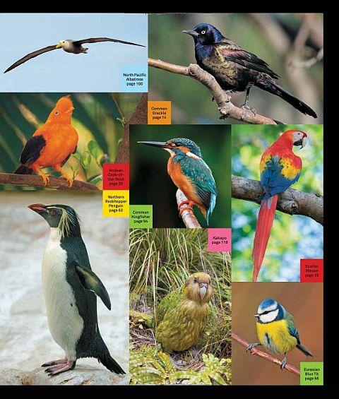 LEGO Ideas Birds Book Gallery 2
