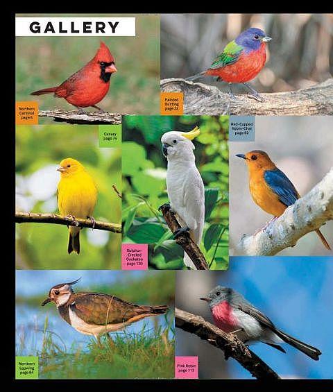 LEGO Ideas Birds Book Gallery